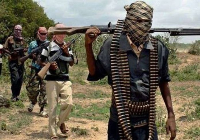 Insurgency: Farming activities to resume in Borno, Government hints